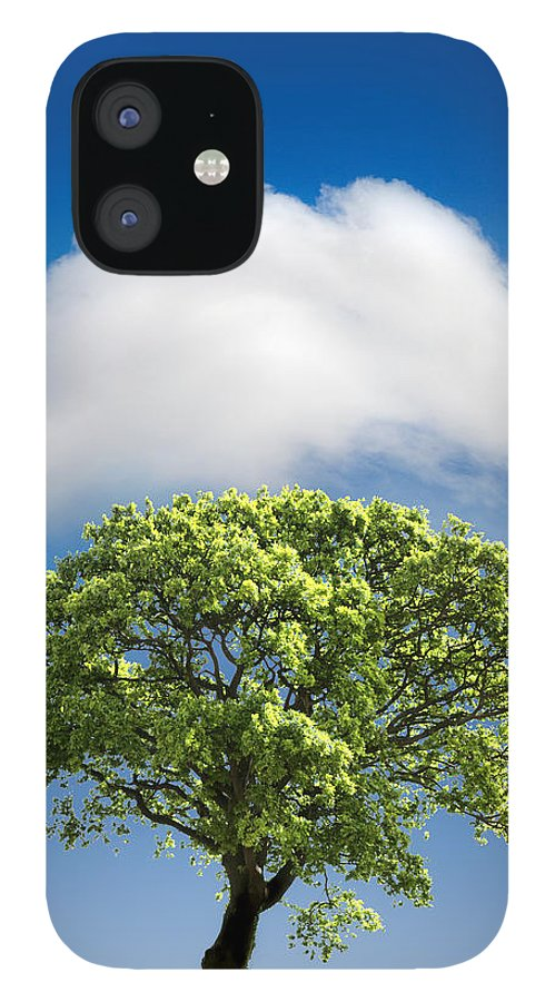 Tree IPhone 12 Case featuring the photograph Cloud Cover by Mal Bray