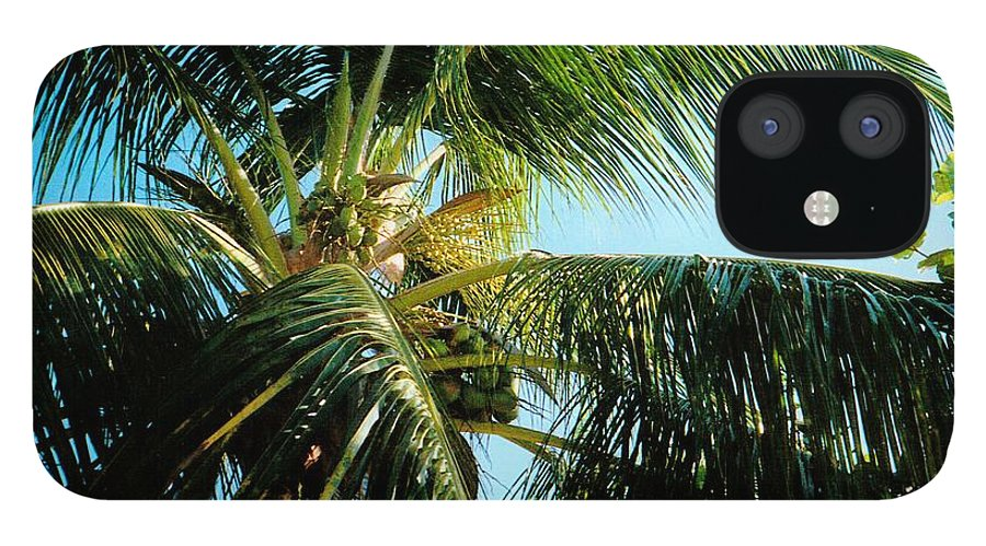 Jamaica IPhone 12 Case featuring the photograph Coconut Tree by Debbie Levene