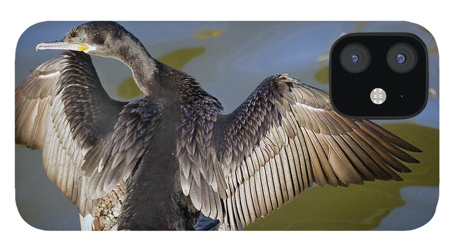 Neotropic Cormorant IPhone 12 Case featuring the photograph Cormorant looking back by Robert Brown