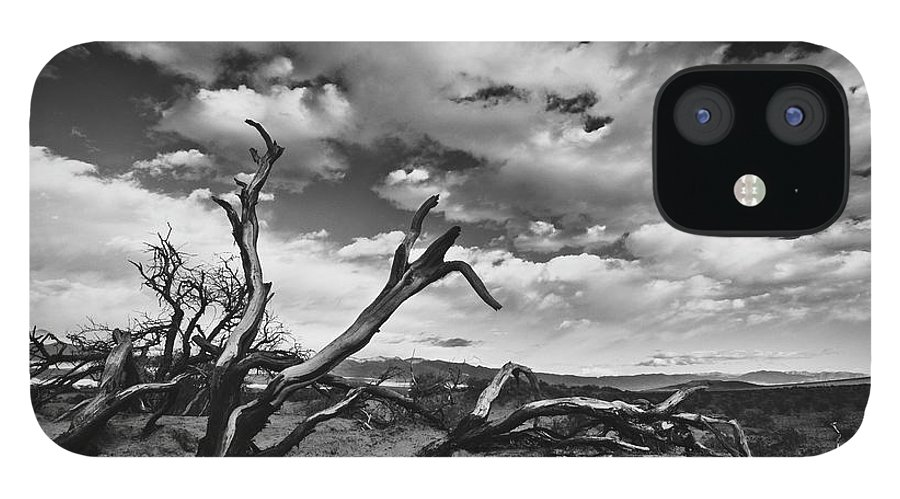 Landscape IPhone 12 Case featuring the photograph Dead Trees at Mesquite Dunes by Nathan Spotts