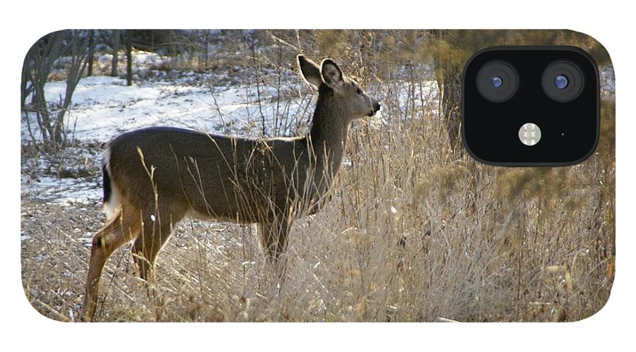 Deer IPhone 12 Case featuring the photograph Deer in Morning light by Toni Berry