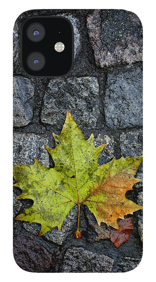 Nature IPhone 12 Case featuring the photograph Deville by Skip Hunt