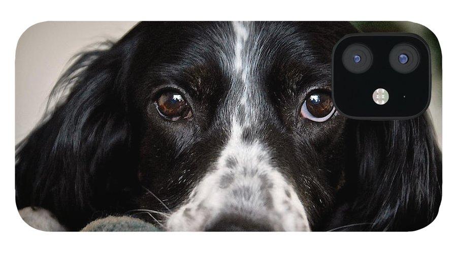 English Setter IPhone 12 Case featuring the photograph English Setter Eyes by Zayne Diamond Photographic