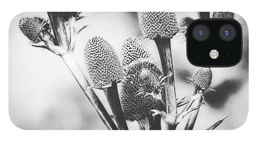 Beautiful IPhone 12 Case featuring the photograph Eryngium #flower #flowers by John Edwards