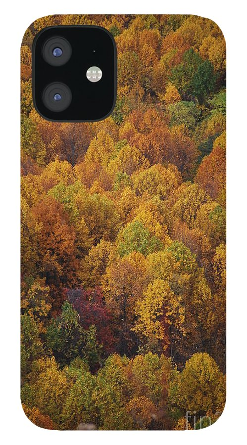 Fall IPhone 12 Case featuring the photograph Fall Cluster by Eric Liller