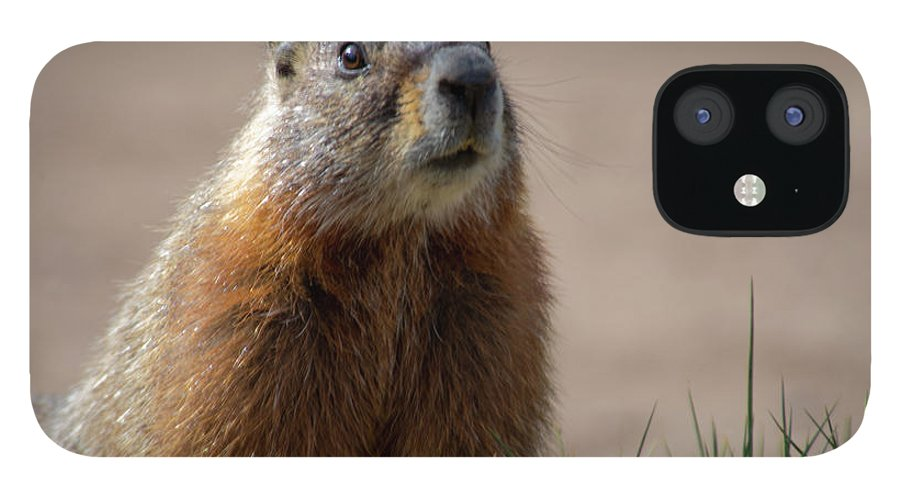 Wyoming IPhone 12 Case featuring the photograph Fearless by Frank Madia