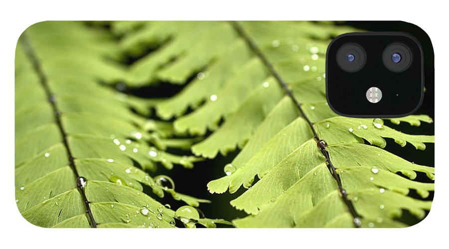 Ferns IPhone 12 Case featuring the photograph Fern by Jessica Wakefield