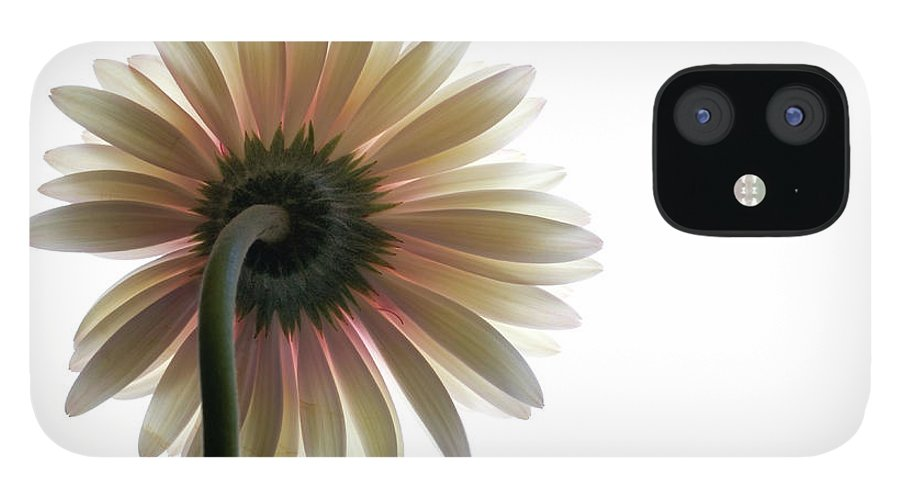 Flower iPhone 12 Case featuring the photograph Gerber Daisy by Jessica Wakefield