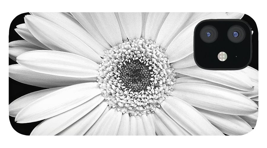 Gerber IPhone 12 Case featuring the photograph Single Gerbera Daisy by Marilyn Hunt