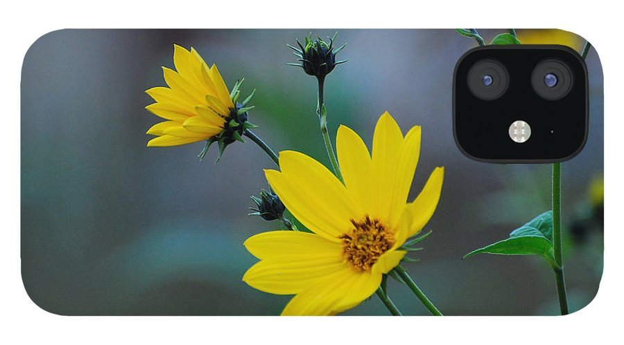 Herb IPhone 12 Case featuring the photograph Herb by Adrian Bud