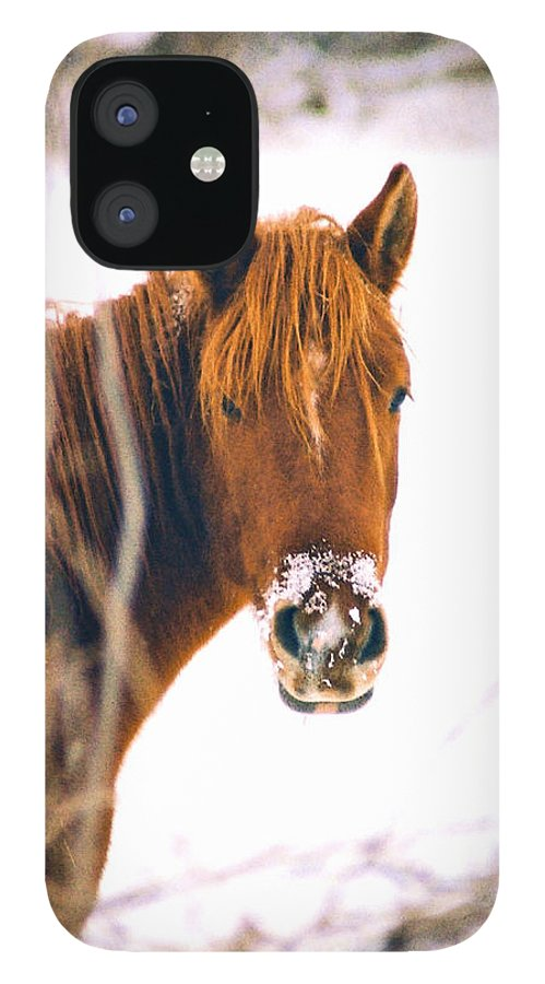 Horse IPhone 12 Case featuring the photograph Horse in winter by Steve Karol