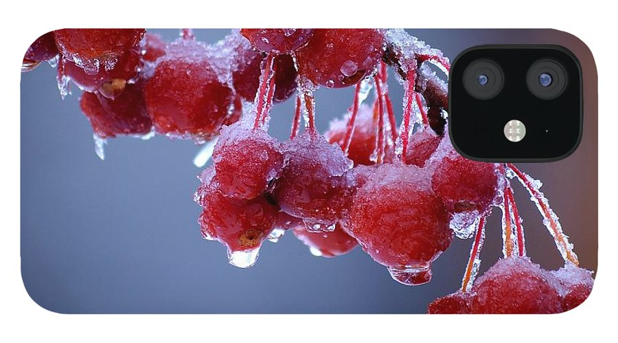 Winter IPhone 12 Case featuring the photograph Icy Berries by Lisa Kane