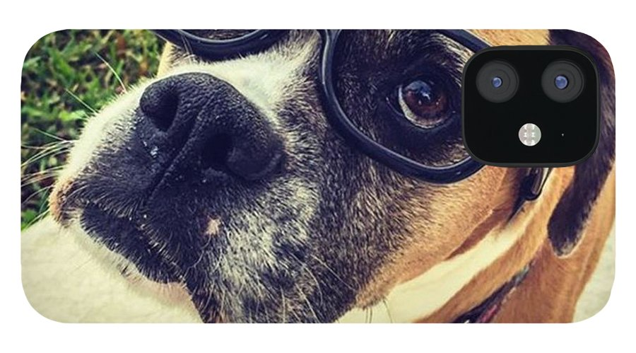 Miamiphotographers IPhone 12 Case featuring the photograph Intellectual Boxer #juansilvaphotos by Juan Silva