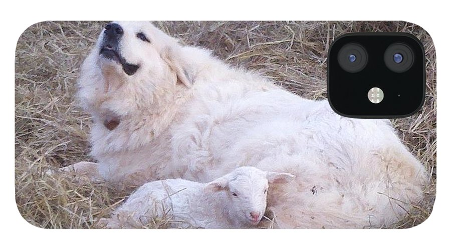 Great Pyrenees Dog IPhone 12 Case featuring the photograph Isabel and Molly 2 by Ginger Concepcion