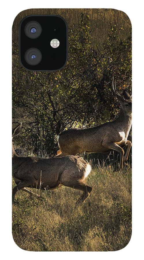 Deer IPhone 12 Case featuring the photograph Jumping deer by Roy Nierdieck