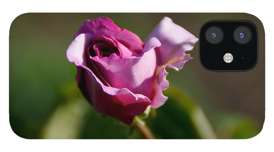Flower IPhone 12 Case featuring the photograph Lavender Rose by Toni Berry