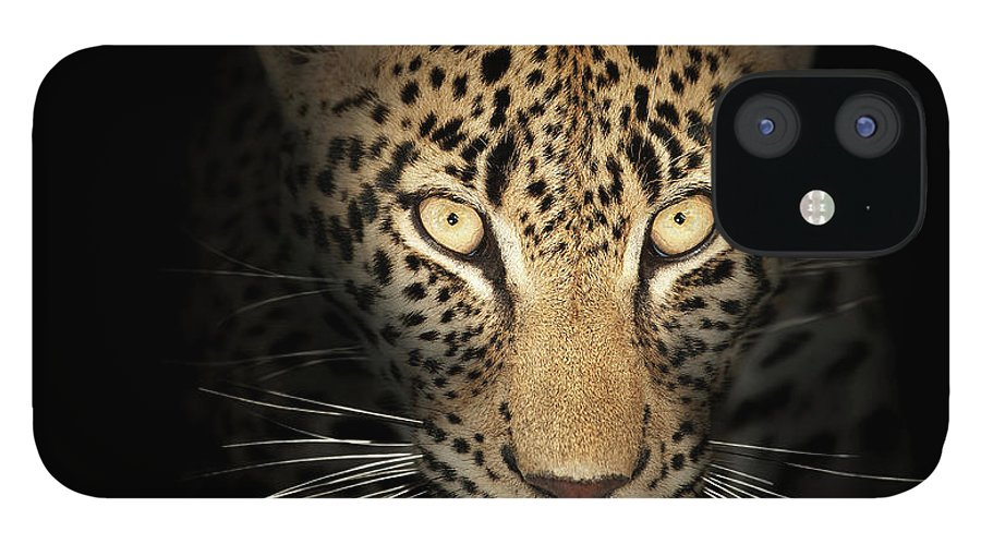 Leopard IPhone 12 Case featuring the photograph Leopard In The Dark by Johan Swanepoel