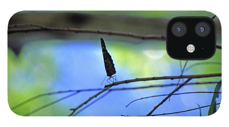 Butterfly IPhone 12 Case featuring the photograph Life on the Edge by Randy Oberg