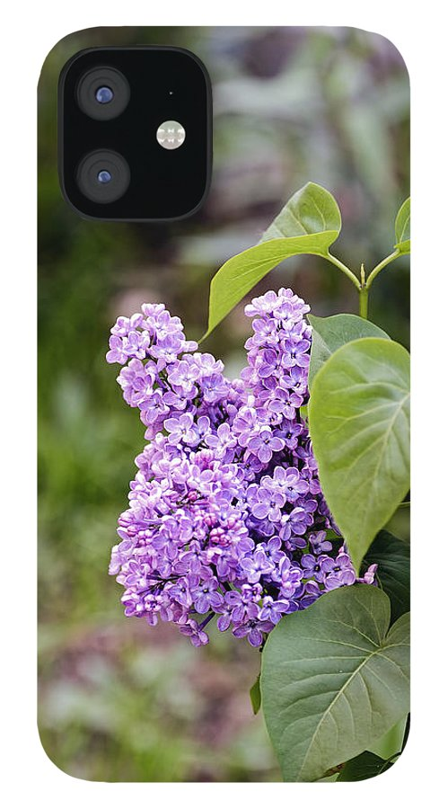 Beautiful IPhone 12 Case featuring the photograph Lilac Flower on a blurred background by Adrian Bud