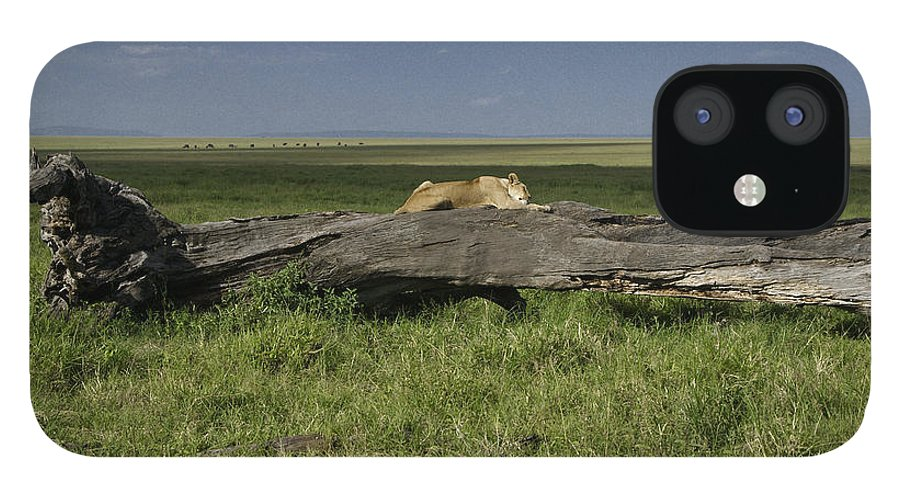Africa IPhone 12 Case featuring the photograph Lion on a Log by Michele Burgess