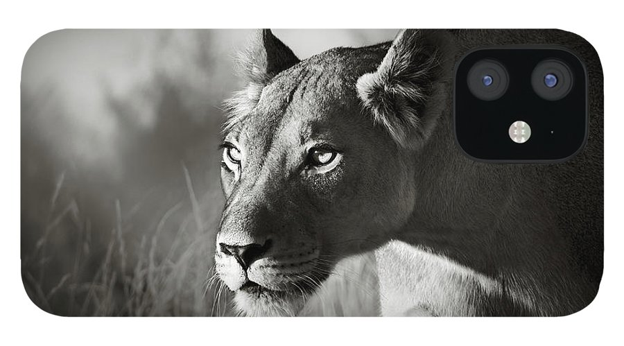 Lioness IPhone 12 Case featuring the photograph Lioness stalking by Johan Swanepoel