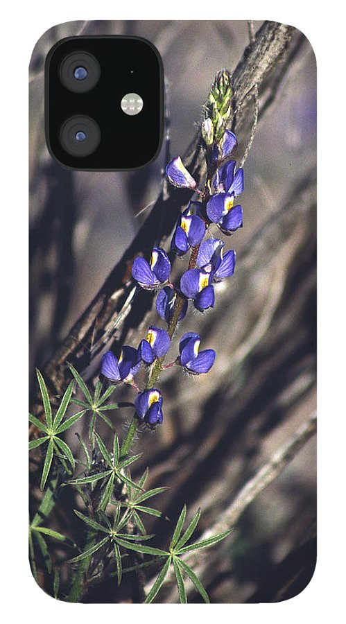 Flower IPhone 12 Case featuring the photograph Lonely Lupine by Randy Oberg
