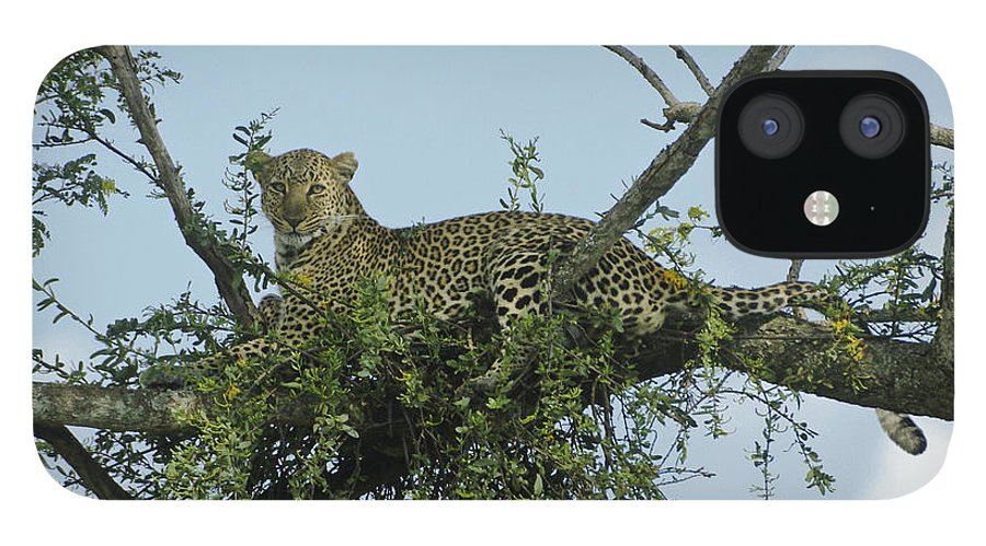 Africa IPhone 12 Case featuring the photograph Lounging Leopard by Michele Burgess