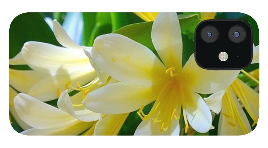 Decor IPhone 12 Case featuring the photograph Lovely White And Yellow #flowers by Shari Warren