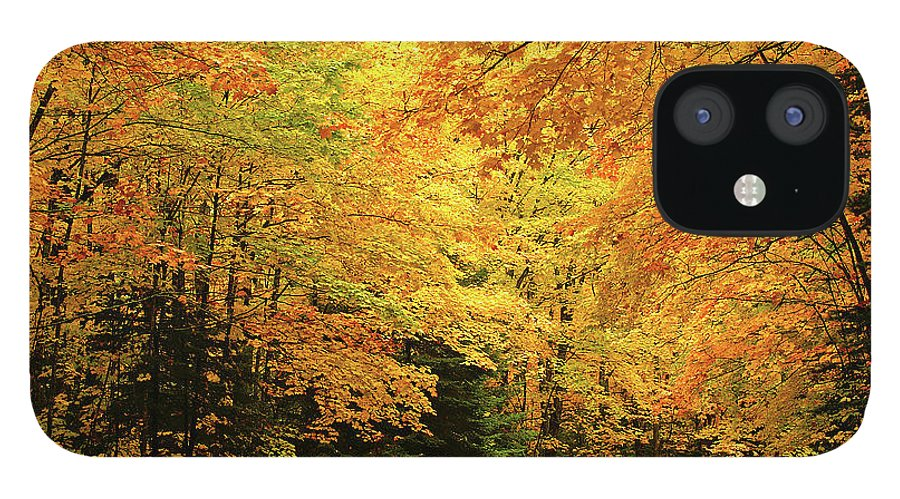 Minnesota Maples IPhone 12 Case featuring the photograph Maple Blaze by Bill Morgenstern