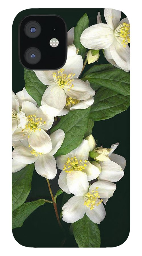 White Flowers IPhone 12 Case featuring the photograph Mock Orange by Sandi F Hutchins
