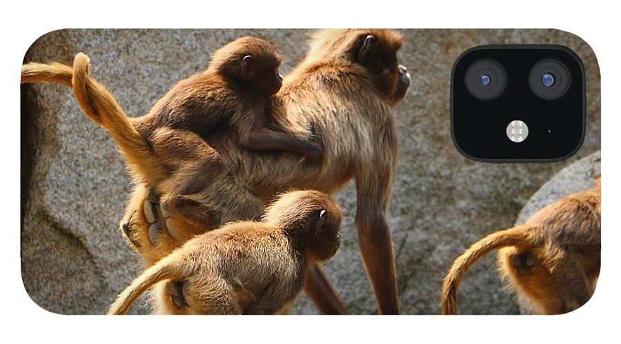 Animal IPhone 12 Case featuring the photograph Monkey Family by Dennis Maier