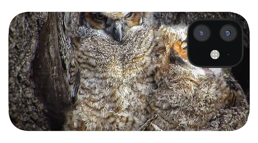 Great Horned Owl IPhone 12 Case featuring the photograph Nap time by Rrrose Pix