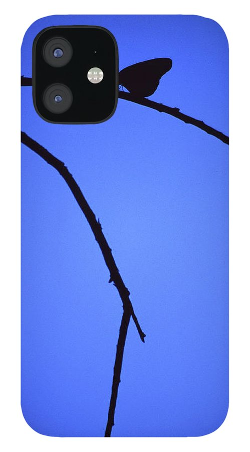 Nature IPhone 12 Case featuring the photograph Natures Elegance by Randy Oberg