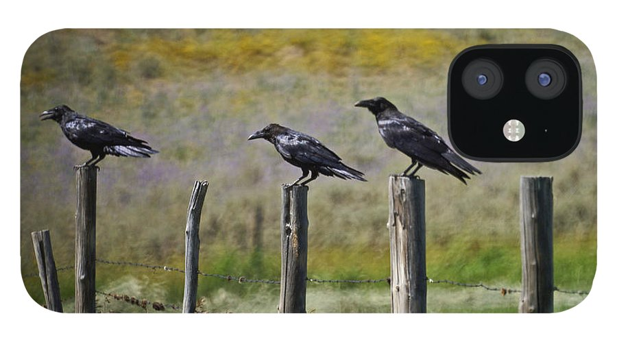 Crows IPhone 12 Case featuring the photograph Neighborhood Watch Crows by Heather Coen