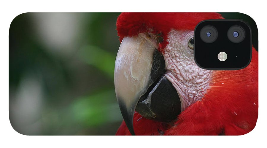 Bird IPhone 12 Case featuring the photograph Old Red Parrot by Ruben Flanagan