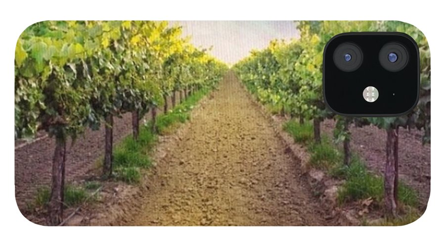 Vineyard IPhone 12 Case featuring the photograph Old #vineyard Photo I Rescued From My by Shari Warren