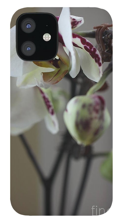 Orchid IPhone 12 Case featuring the photograph Orchid - 100 by David Bearden