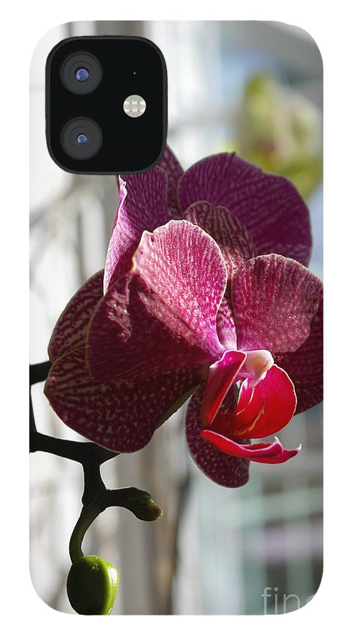 Orchid IPhone 12 Case featuring the photograph Orchid - 102 by David Bearden