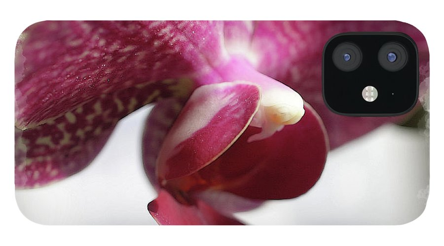 Orchids IPhone 12 Case featuring the photograph Orchid 5 by David Bearden