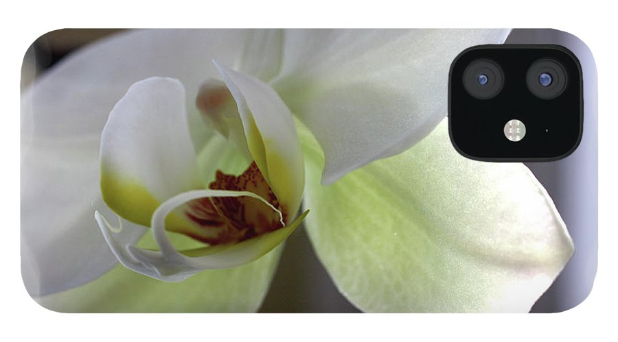 White Orchid IPhone 12 Case featuring the photograph Orchid for Valentines Day by David Bearden