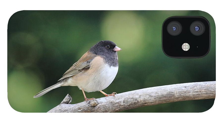 Wildlife IPhone 12 Case featuring the photograph Oregon Junco by Wingsdomain Art and Photography