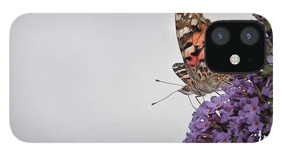 Insectsofinstagram IPhone 12 Case featuring the photograph Painted Lady (vanessa Cardui) by John Edwards