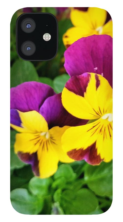 Pansies IPhone 12 Case featuring the photograph Pansies 2 by Valerie Josi