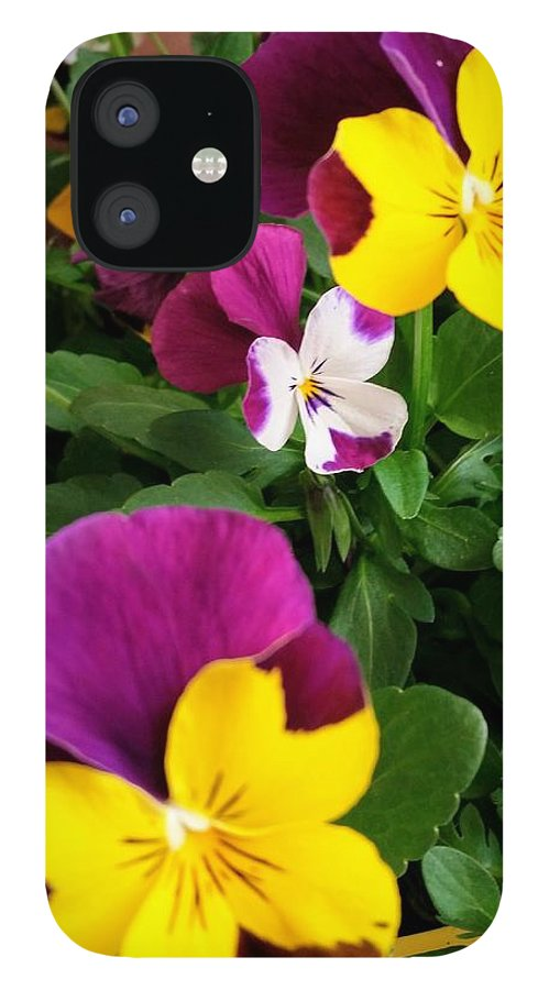 Pansies iPhone 12 Case featuring the photograph Pansies 3 by Valerie Josi