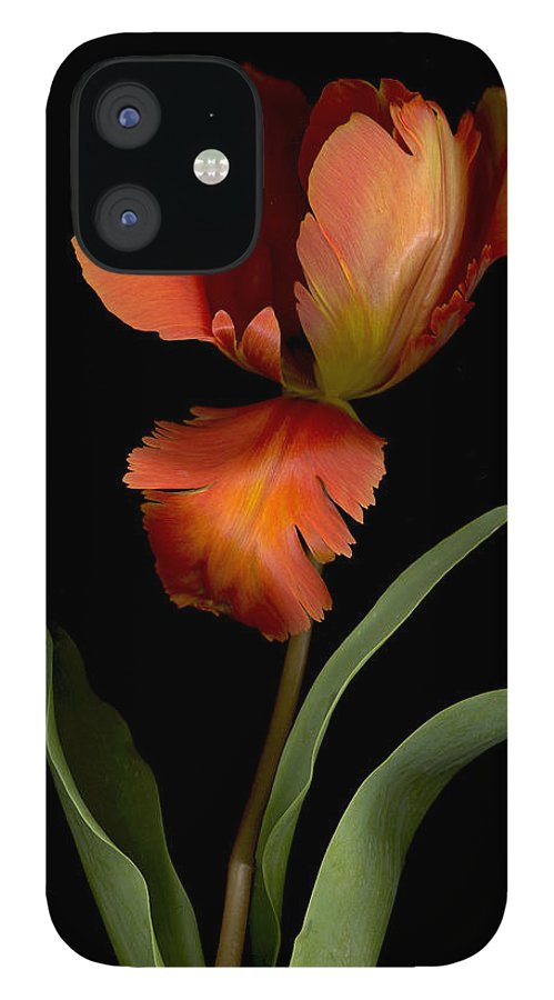 Garden IPhone 12 Case featuring the photograph Parrot Tulip by Sandi F Hutchins