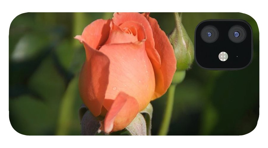 Rose IPhone 12 Case featuring the photograph Peach Rose by Toni Berry