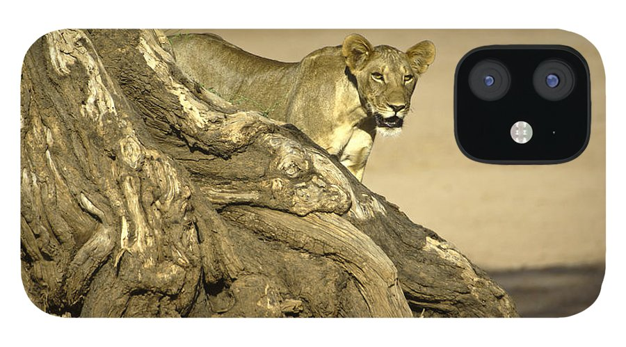 Africa IPhone 12 Case featuring the photograph Peeking Out by Michele Burgess
