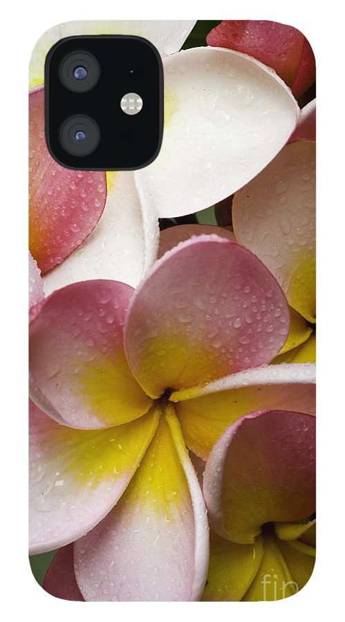 Pink Frangipani IPhone 12 Case featuring the photograph Pink frangipani by Sheila Smart Fine Art Photography