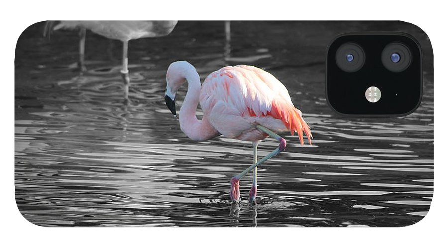 Palm Desert California IPhone 12 Case featuring the photograph Pinky by Colleen Cornelius