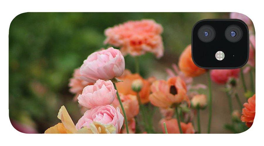 Powder Pink Ranunculus IPhone 12 Case featuring the photograph Powder Pink and Salmon Ranunculus by Colleen Cornelius
